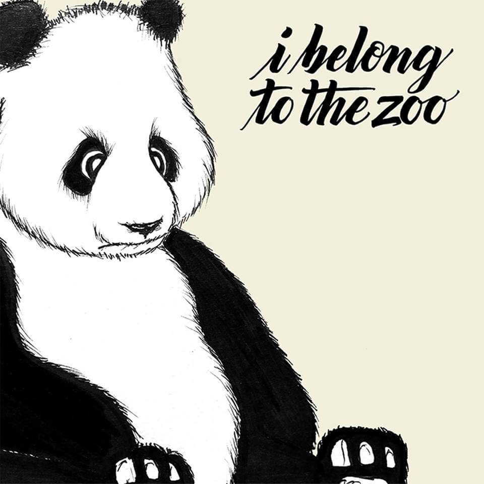 I Belong To The Zoo Album Art